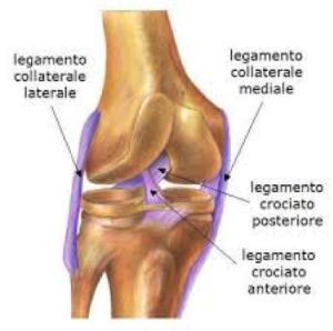 legamento collaterale ginocchio